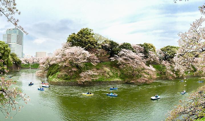 сакура, Химэдзи
