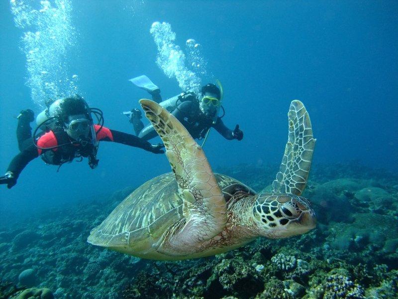 Морская черепаха, подводный мир Окинавы