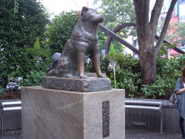 Памятник Хатико, Сибуя