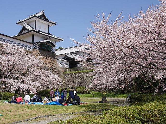 Сакура у замка Канадзава