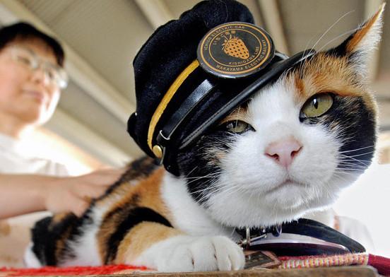 Кошка - станционный смотритель