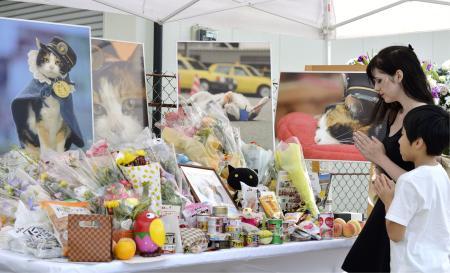 В июне прошлого года кошка Тама покинула этот мир