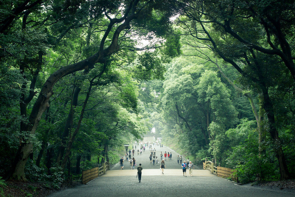 Лес в храме Мэйдзи