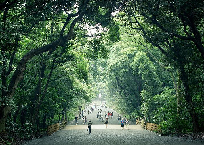 Дорога к храму Мэйдзи