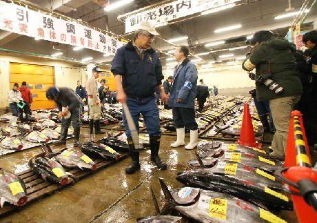 Покупатели на рынке Цукидзи осматривают рыбу