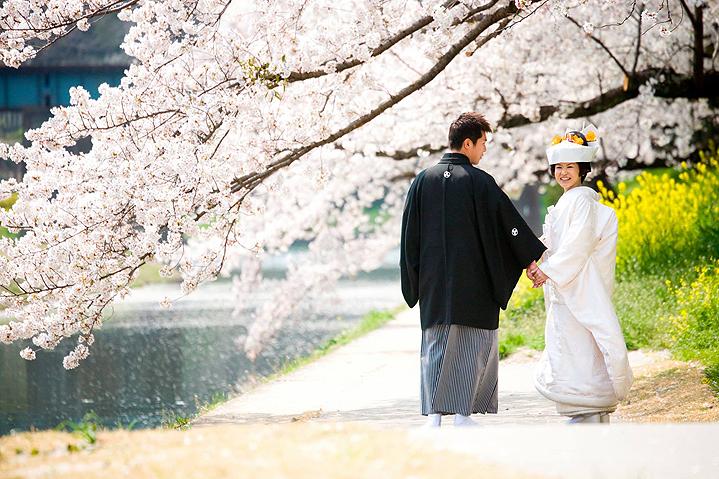 цветущая сакура фото невеста Япония