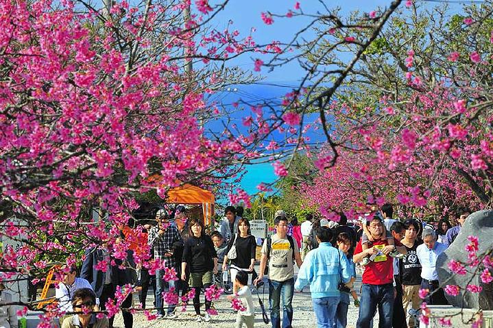 Сакура на Окинаве