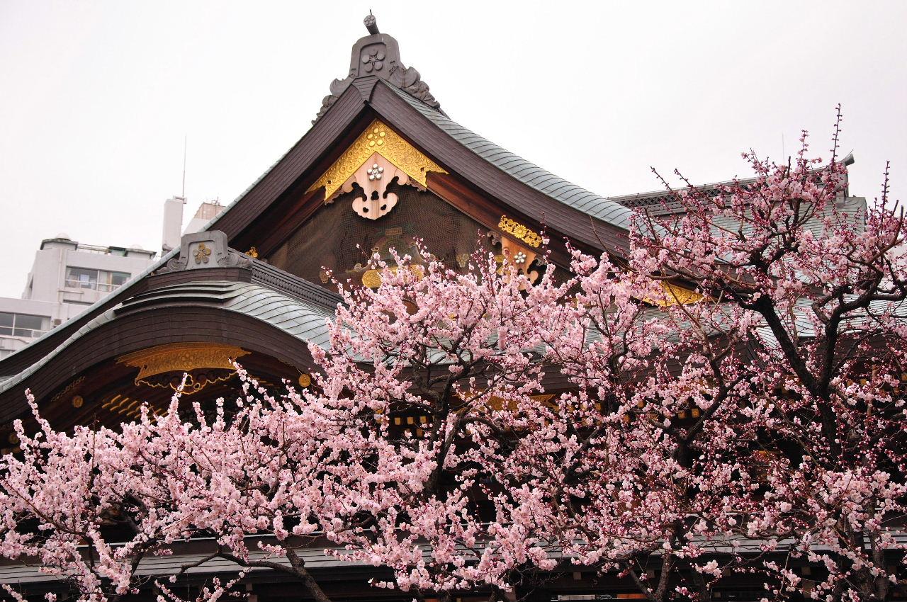 Слива в храме Юсима Тэндзин
