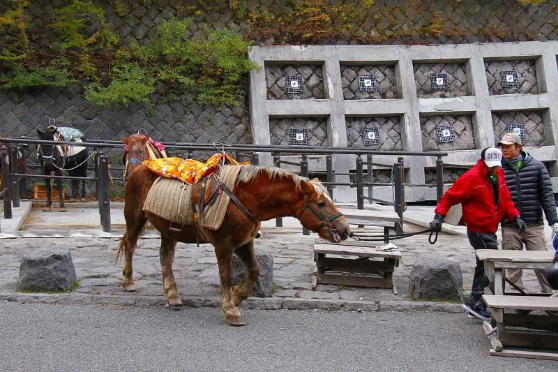 Лошади на горе Фудзи