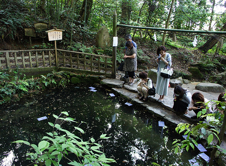 Гадание в храме Яэгаки-дзиндзя