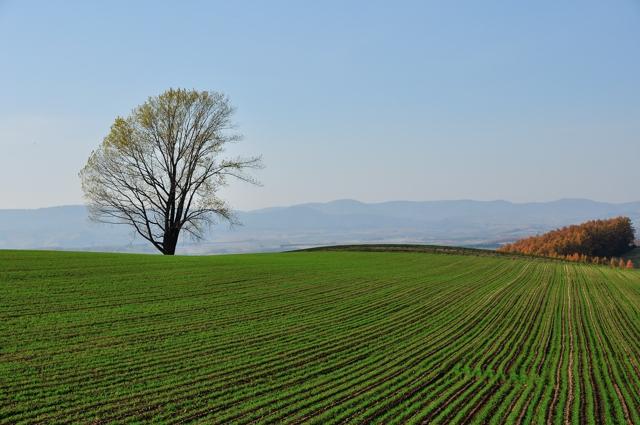 Философское дерево
