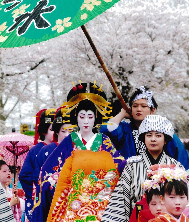 Фестиваль цветения сакуры в Цубамэ (преф. Ниигата)