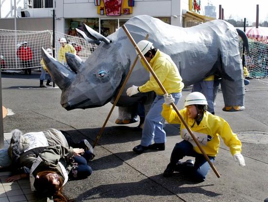 Пострадавший от буйства бумажного носорога в зоопарке Уэно