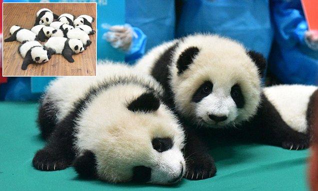 Малыши, родившиеся в Китае