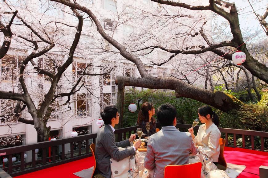 Рестораны с видом на сакуру