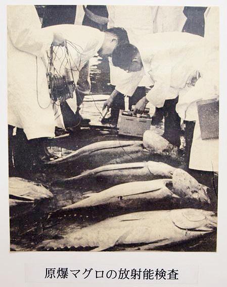 Обследование заражённой рыбы