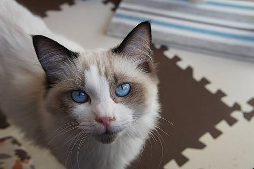 Работник кошачьего кафе