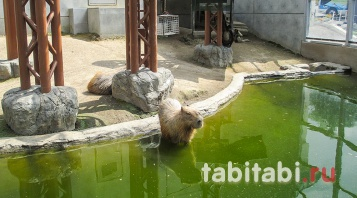 Хоккайдо, Асахикава, зоопарк Асахияма
