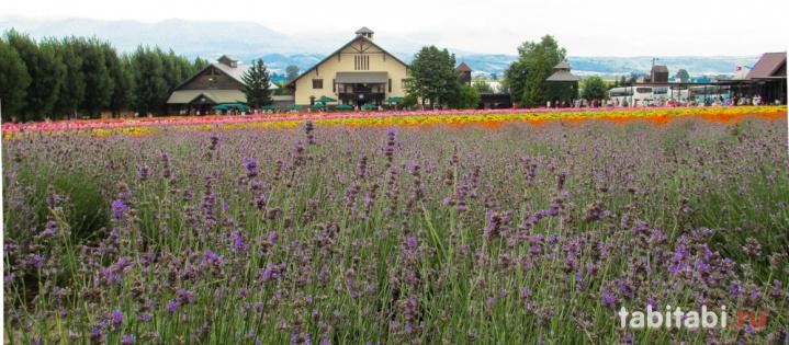Хоккайдо, Фурано, цветочные поля