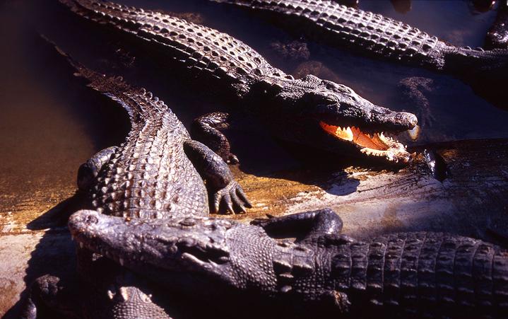 Япония, Бэппу, крокодилы,