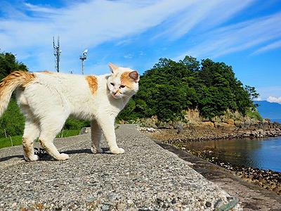 кошачий остров Аосима
