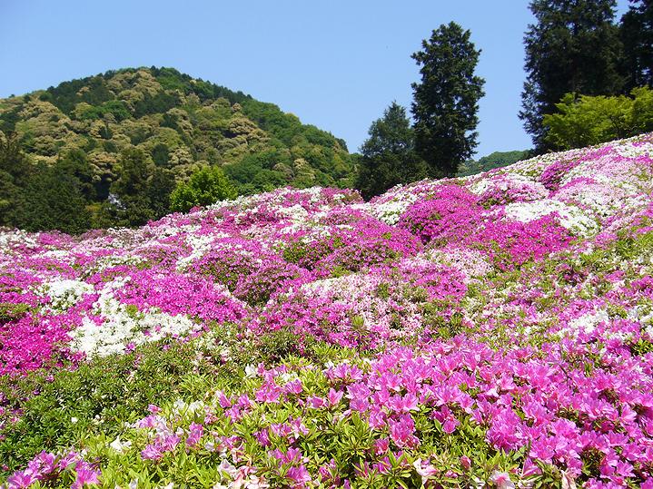 Храм цветов Мимурото-дзи