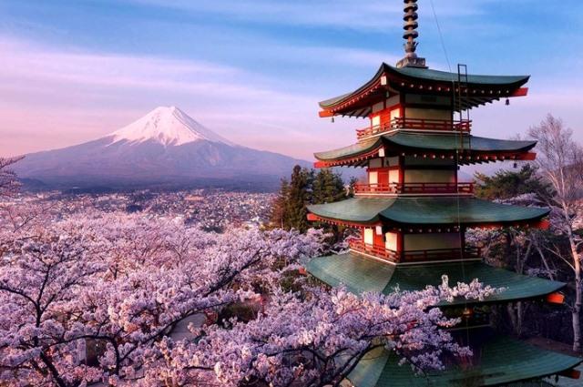 сакура на фоне Фудзи