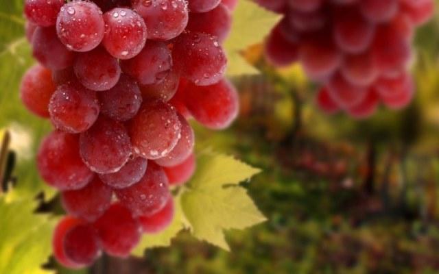 самый дорогой виноград в Японии