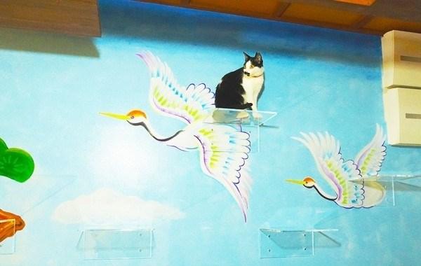 Котики в Японии